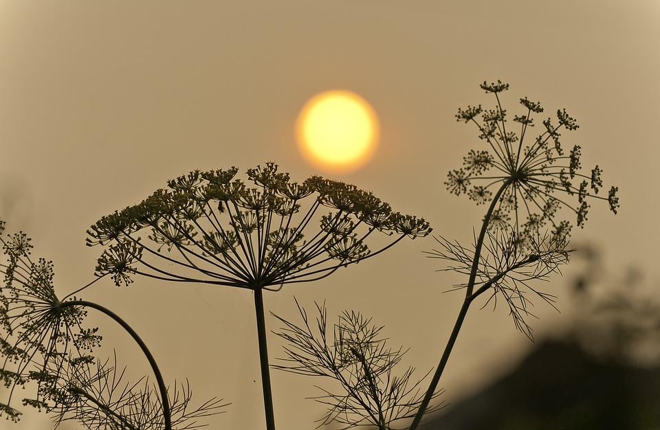 Smoky Sunrises