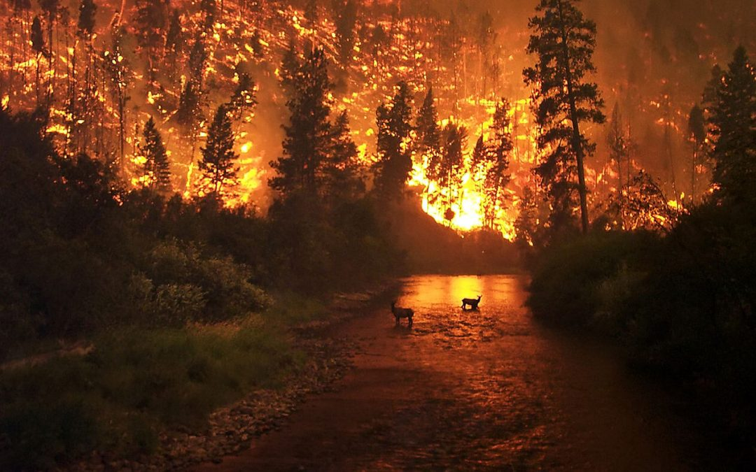 Wildfire in Montana