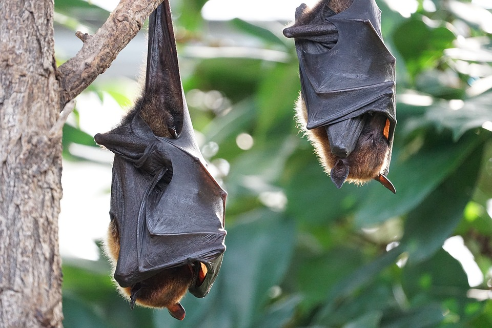 Bat Migrations Changing… And Not For The Better